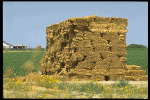 Texas Hay Report